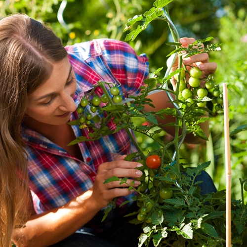 Here are a few essential gardening tools that every homeowner should have on hand.